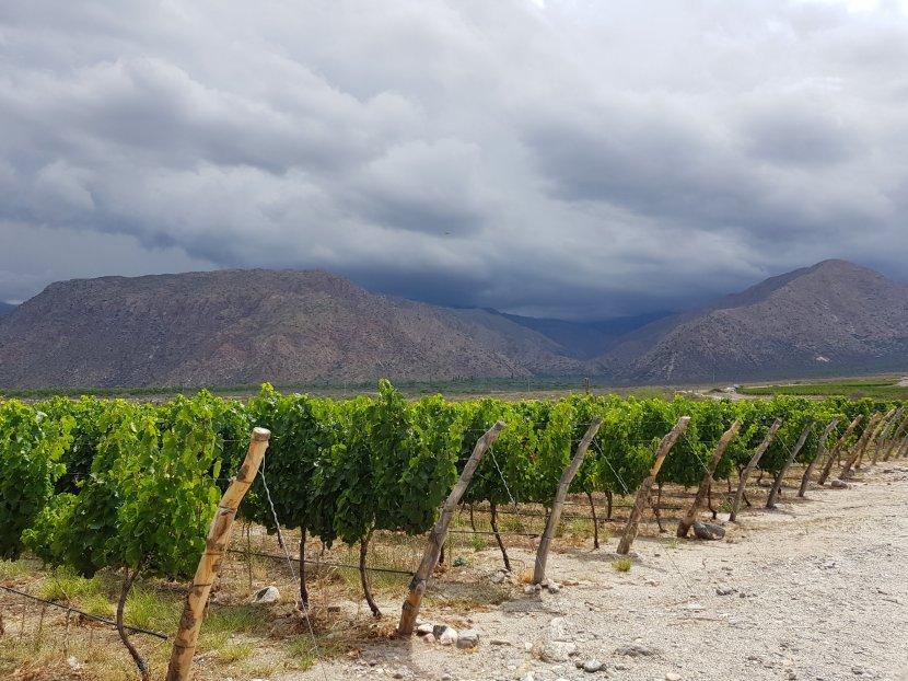 Quaffing wines inCafayate…