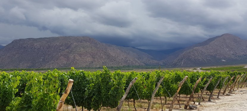 Quaffing wines in Cafayate…